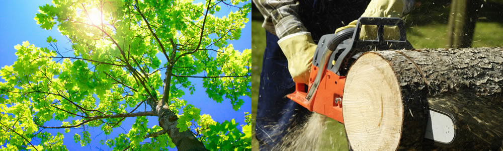 Tree Services Oldsmar